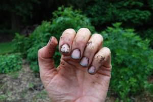 Грязные ногти после огорода